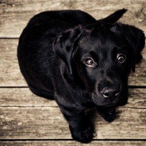 Lifestyle Management Pets AssistAnt