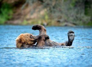 Alaskan cruise wildlife - AssistAnt luxury travel