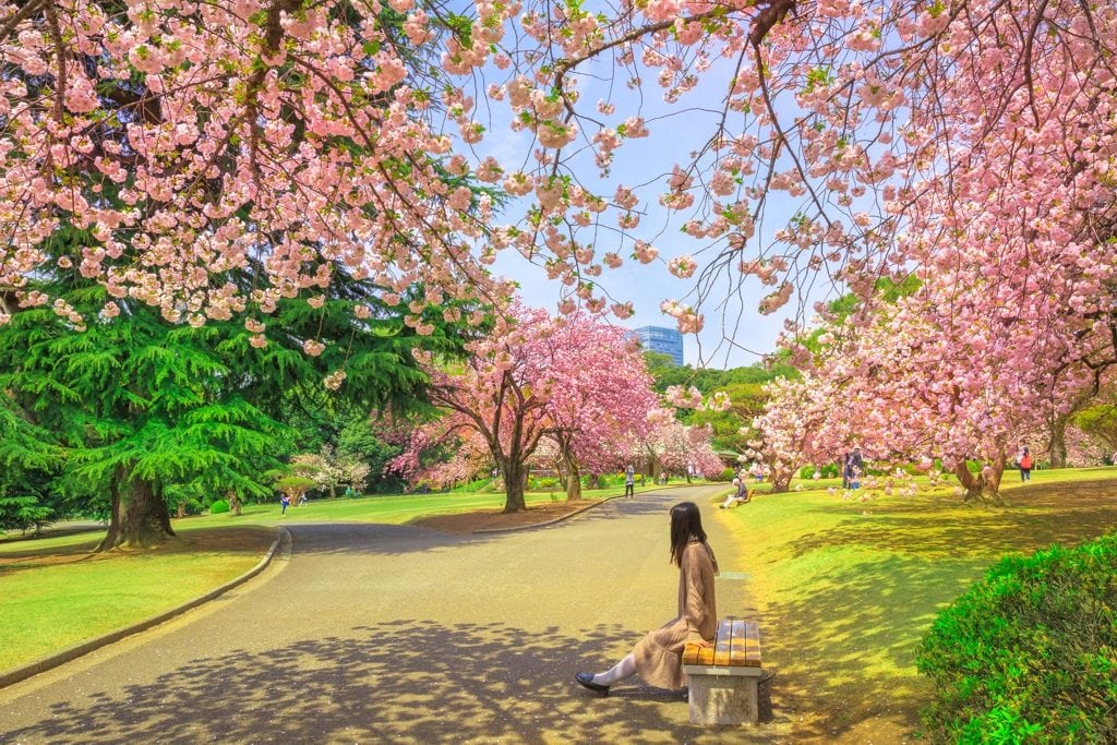 Shinjuku Gyoen Garden Tokyo - AssistAnt