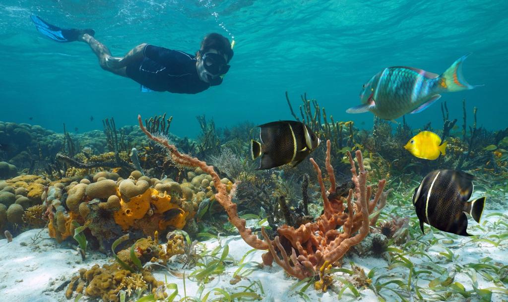 Things to do in St Maarten SXM